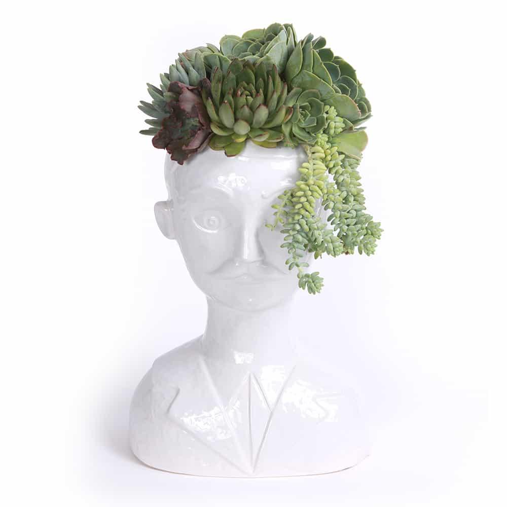 Succulent Male Bust