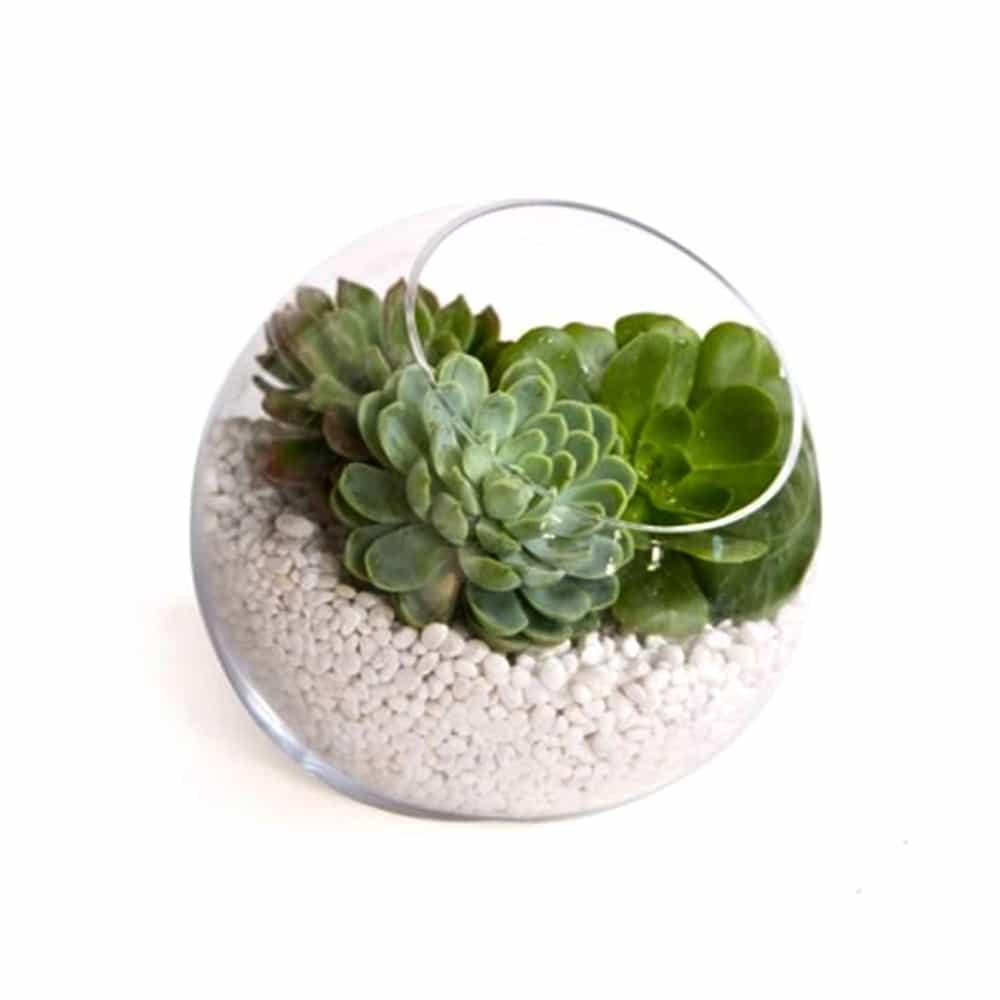 Zen Succulent Planter White