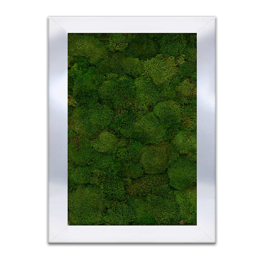 moss wall art floral art. Black Bedroom Furniture Sets. Home Design Ideas