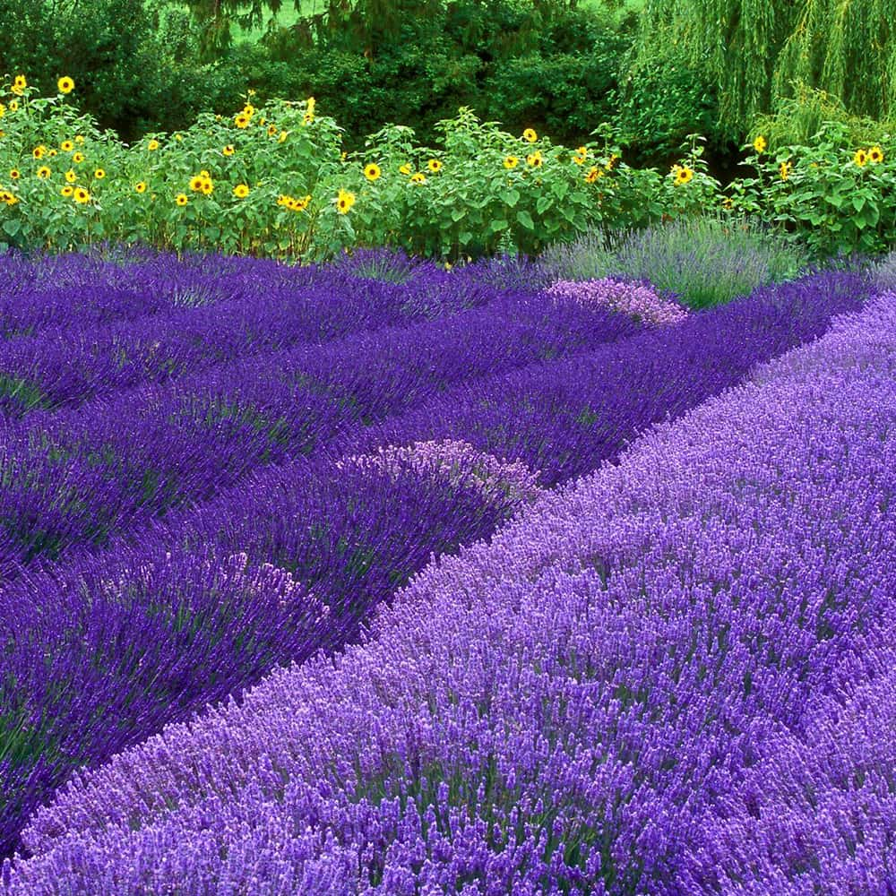 Tuscan Gardens 6