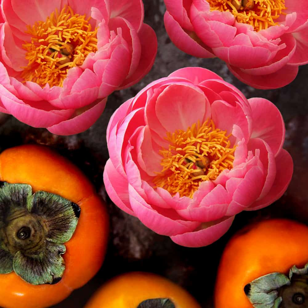 Peonies and Persimmons Class