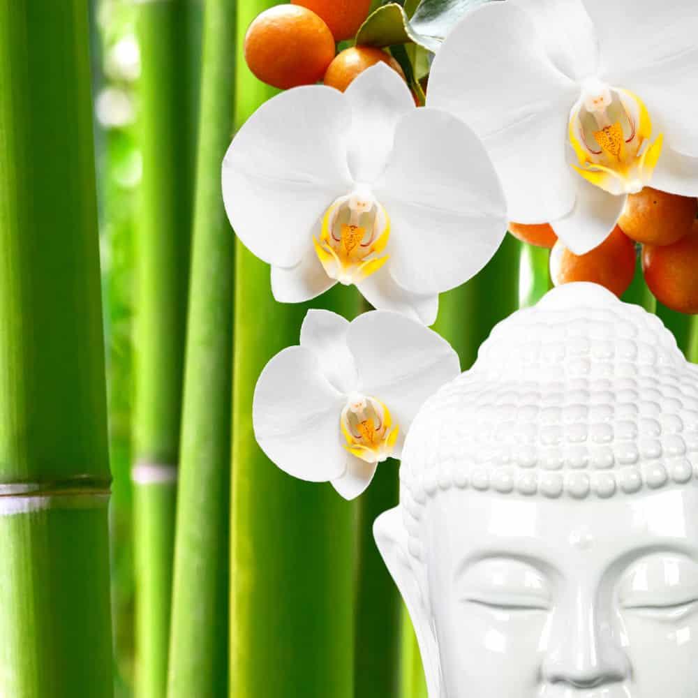 Buddha Blooms New 2