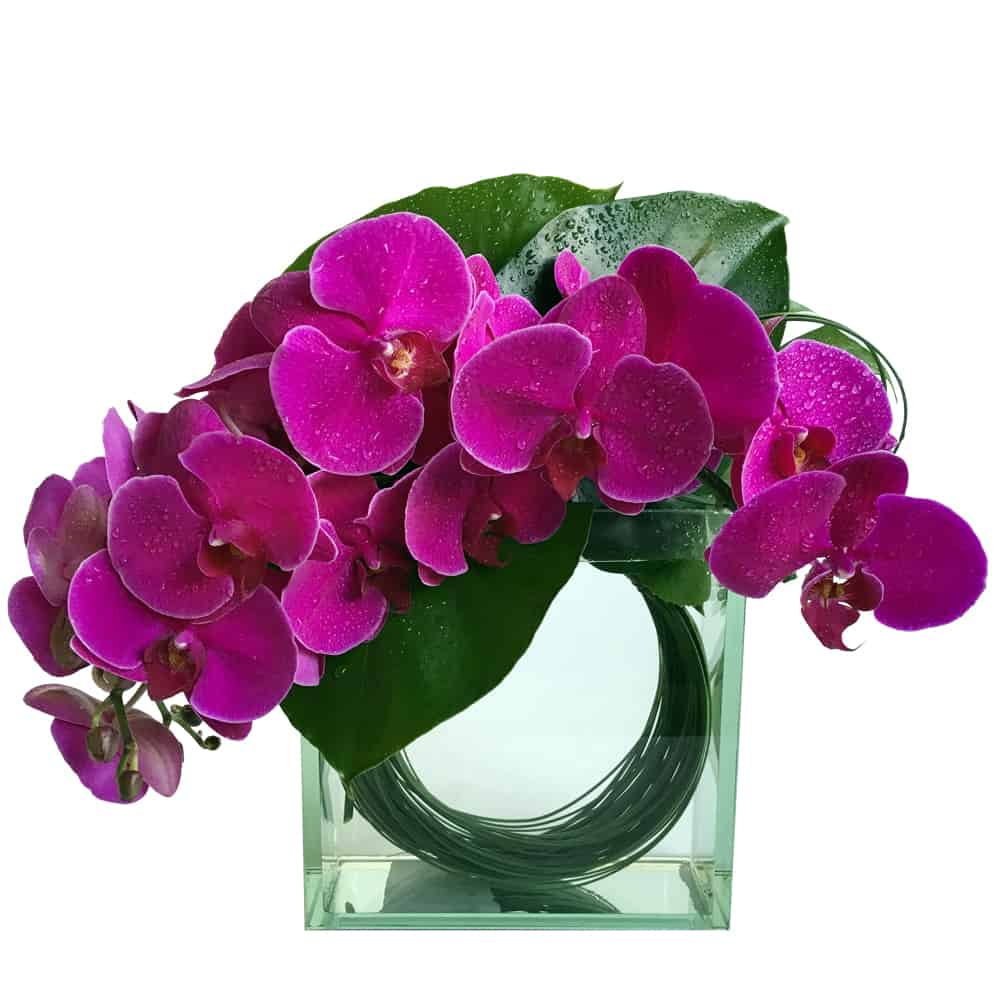 chic orchid