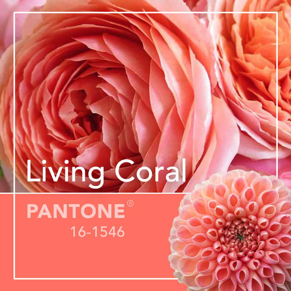 living coral design class 3