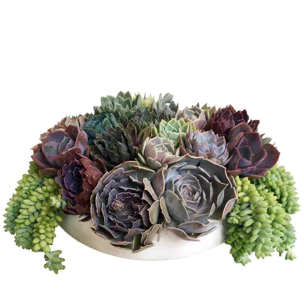 Lush Succulents Floral Art