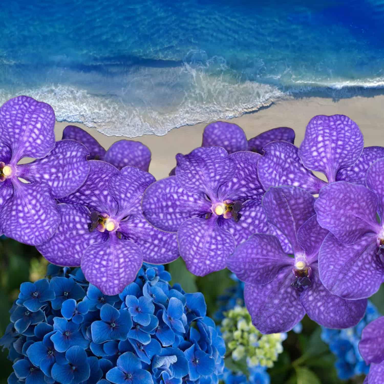 Maldive Blue