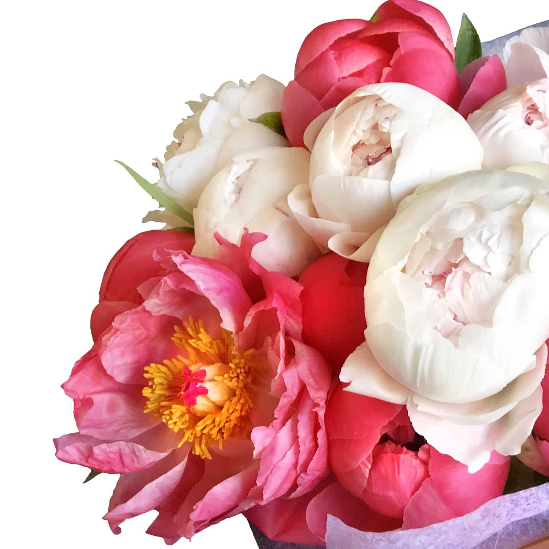 1 dozen Wrapped Peony Bouquet