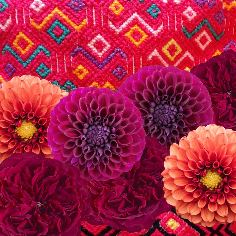 flores thumbnail 2